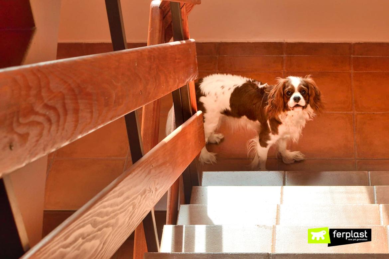 Собака страх лестница что делать