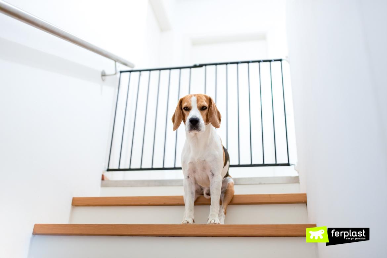 Грустная собака бигль сидит на лестнице