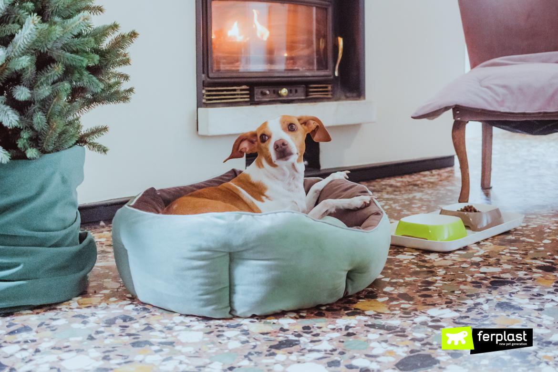 como escolher o travesseiro do cachorro do tamanho certo
