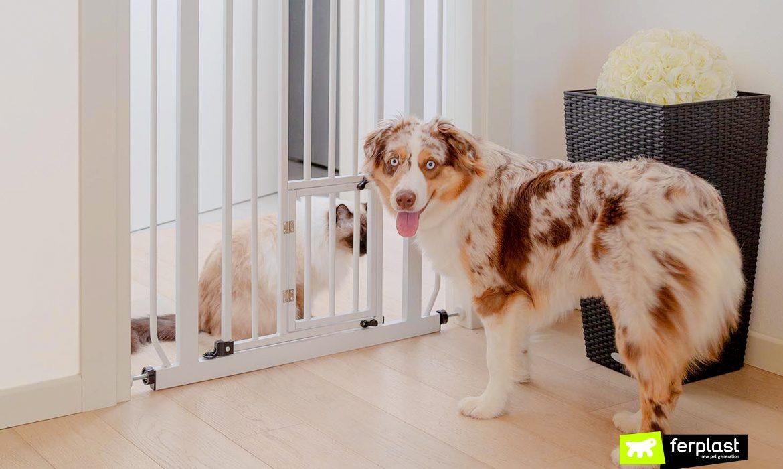 Compartilhamento espaços casa animais como fazer portão