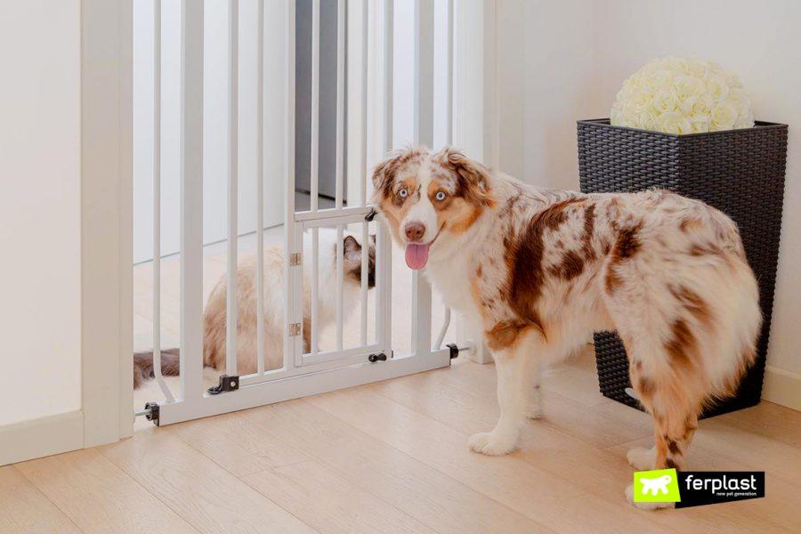 partage d'espaces maison animaux comment faire