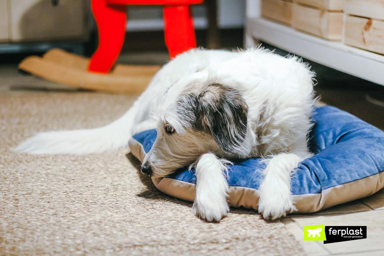 outono dicas cama cachorro quente