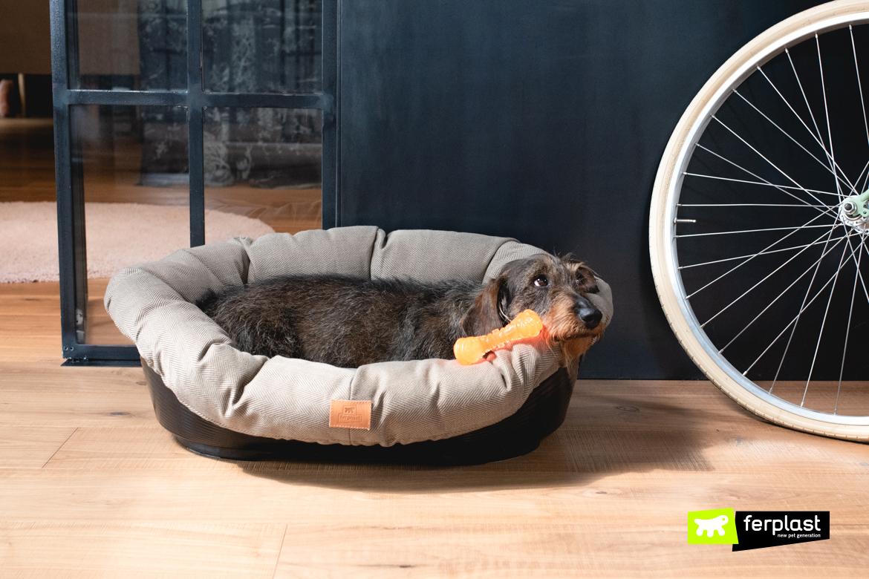almofadas de cachorro de cor neutra para colocar na casa