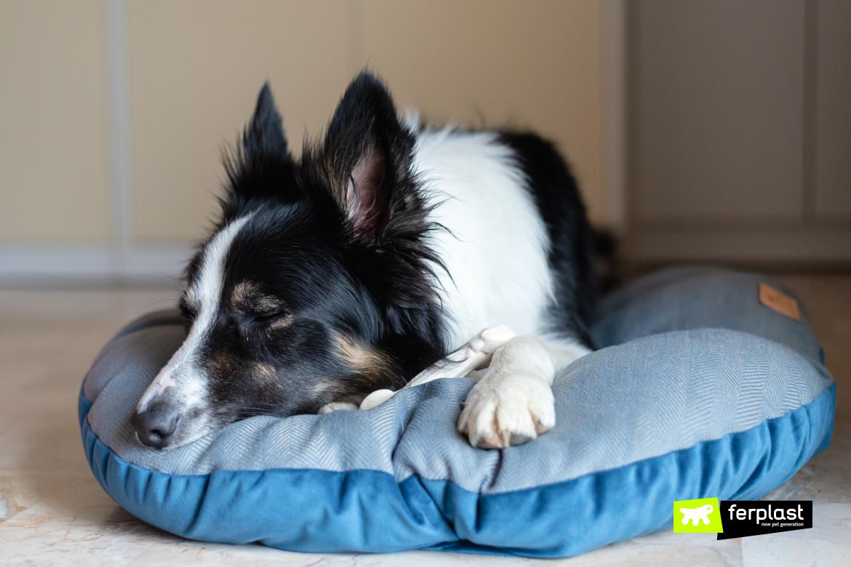 almofada quente para cães grandes