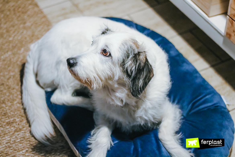 almofada de veludo macio para cachorro