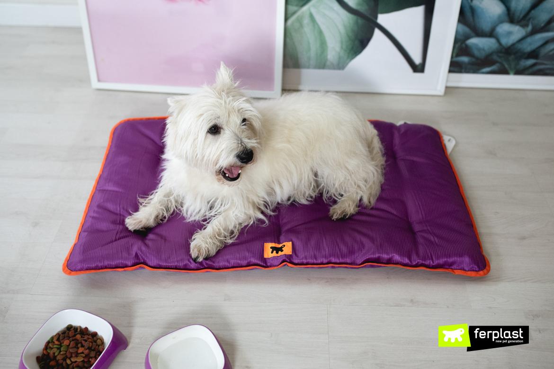 Almofada técnica impermeável cão tecido