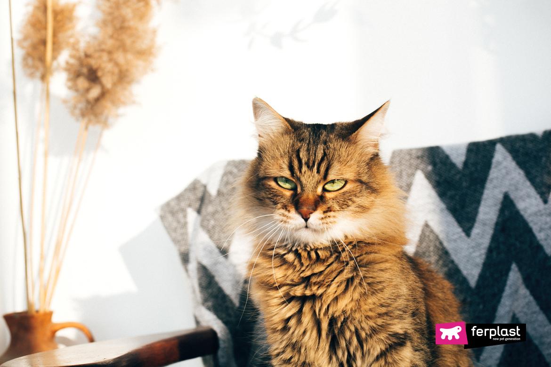 Милый полосатый кот сидит в стильном кресле в солнечной комнате