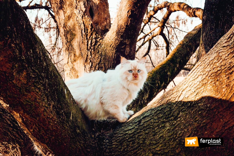 выпуск кот осенью