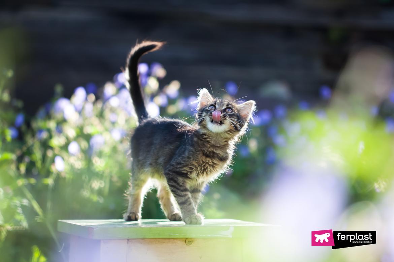 кот щенок брось ап что делать