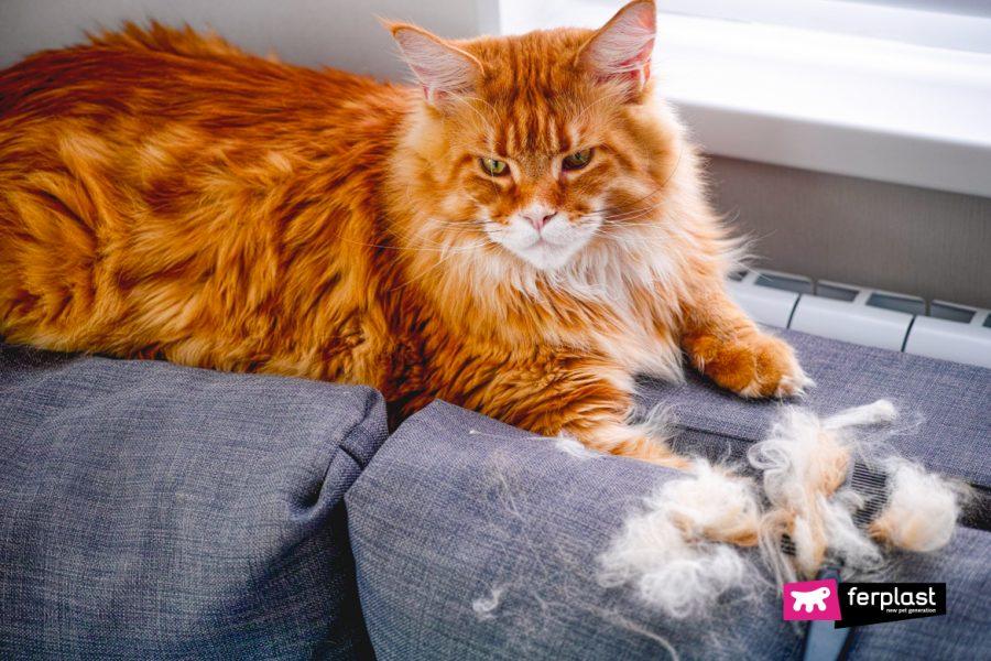 кошачья линька причины
