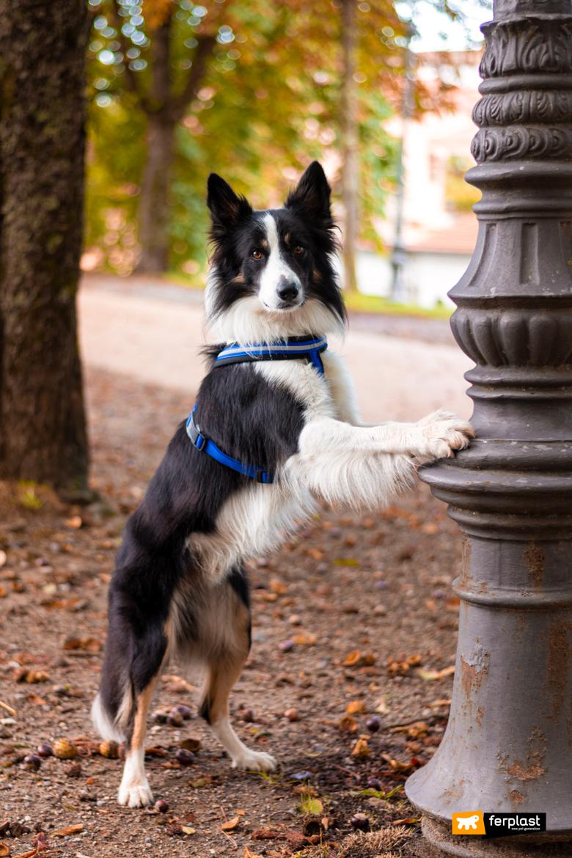Осенние игры с собакой