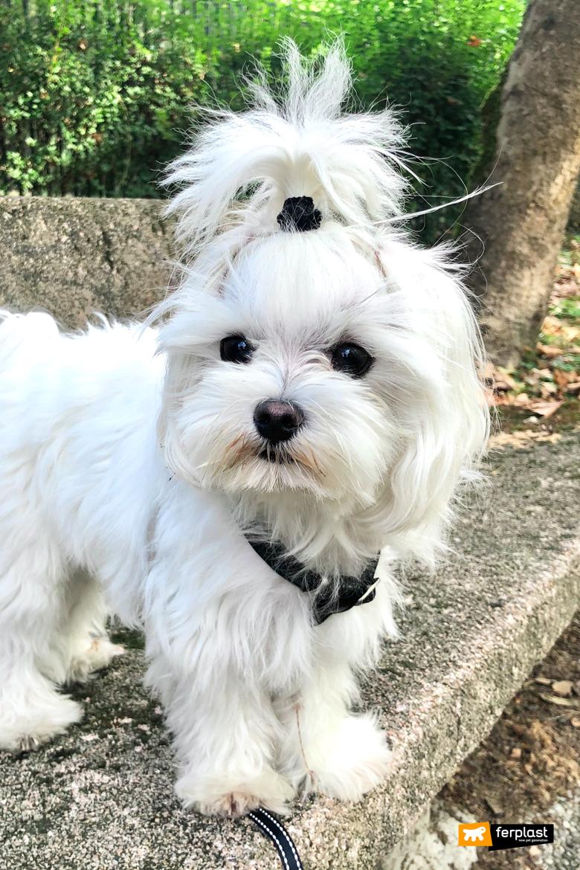 парковая прогулочная собака