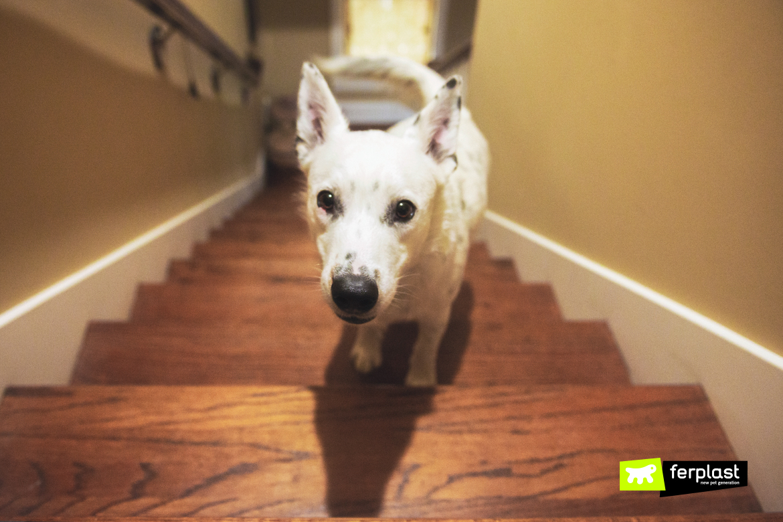 страхи собаки что они есть
