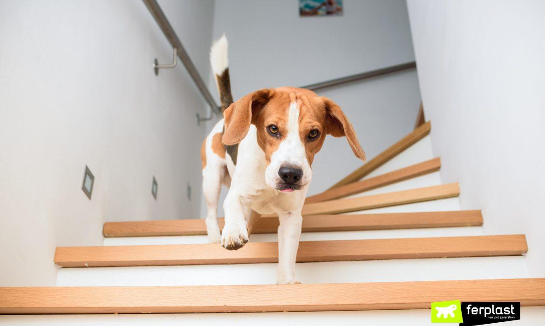 quelles sont les peurs du chien