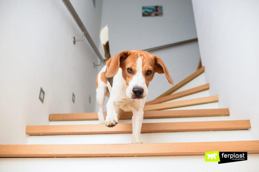 Почему Собаки Боятся Лестниц?