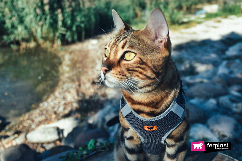 harnais nikita ferplast pour chats