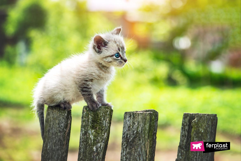заботиться о котенке-отлучении