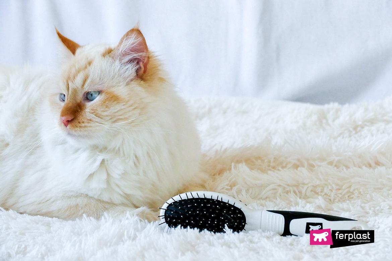кисть для длинношерстной кошки