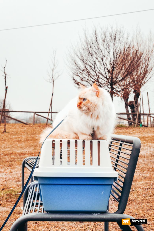 Ферпласт-переноска-для-кошек