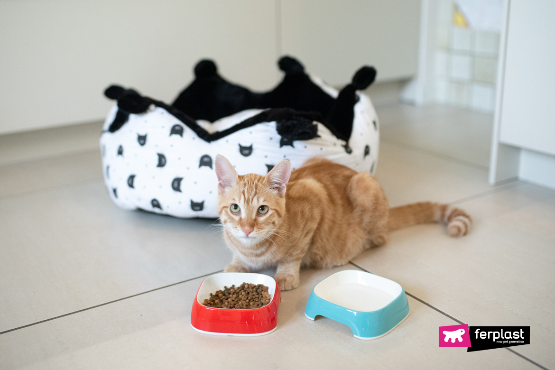 gatto annoiato mangia sempre