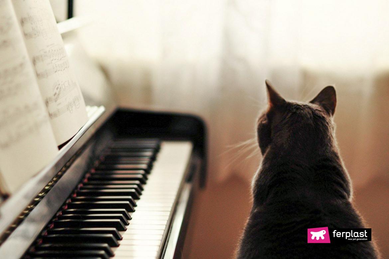 Gatto nero davanti al pianoforte