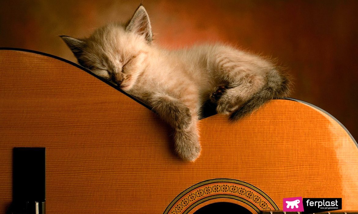 MUSIC FOR CATS: RELAXING SOUNDS AND THE EFFECTS ON THE CAT