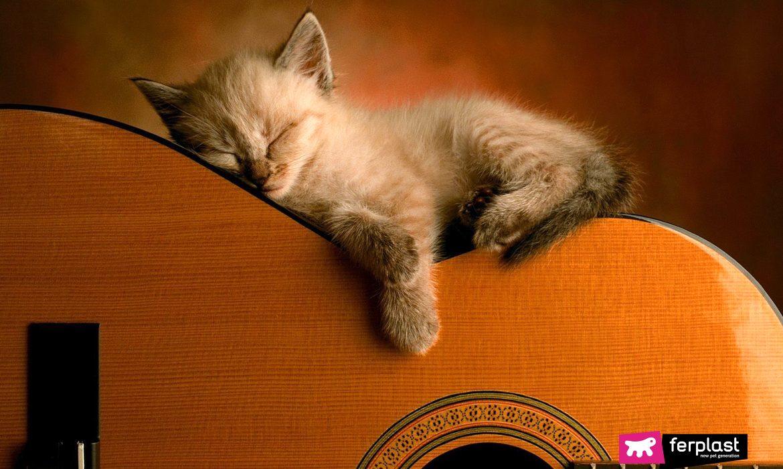 chaton dormir chaton guitare musique relaxant sommeil