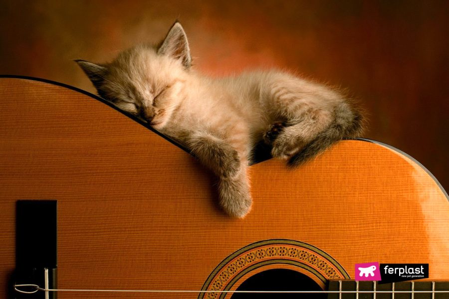 chaton dormir chaton guitare musique relaxant sommeil