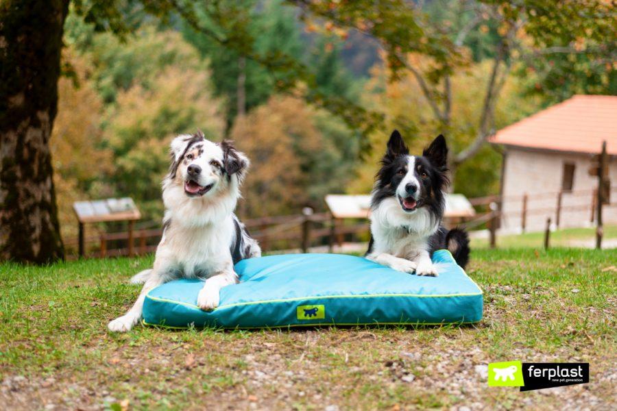 Австралийская овчарка бордер колли ферпласт амбассадор питомник дружба друзья подушка собаки