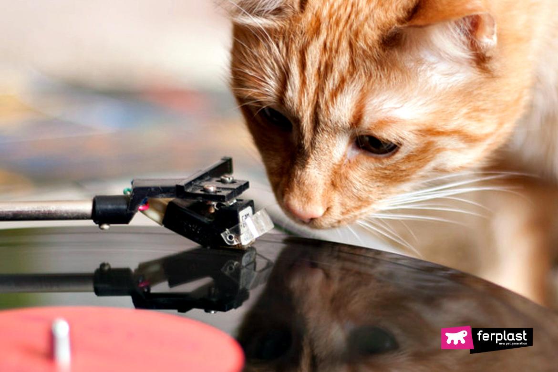 Gatto guarda il giradischi