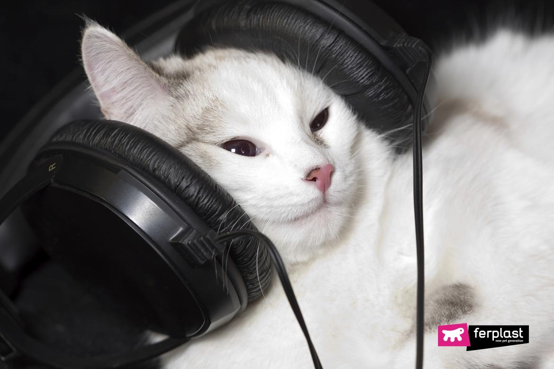 Gatto bianco con le cuffie