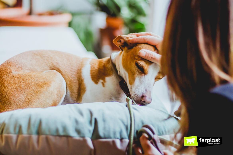 Como fazer carinho no cachorro corretamente