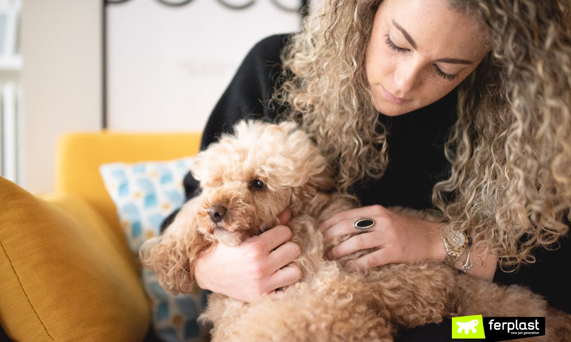 HOW TO AVOID DOG'S UNPLEASANT ODOURS