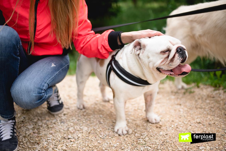 похлопывать и обнимать собак