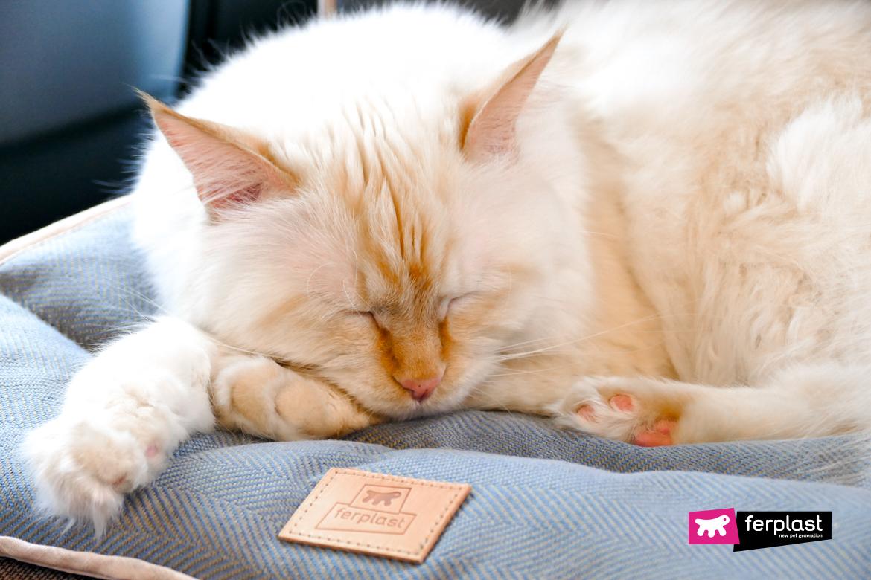 фразы цитаты про кошек литература