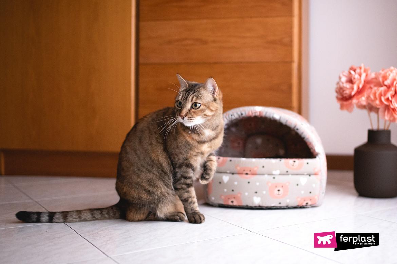 фразы про коты известные афоризмы