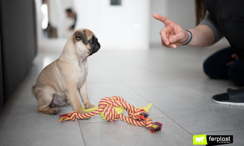 avantages de chien qui parle