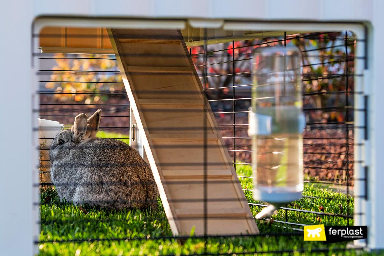 choisir clapier plastique lapin