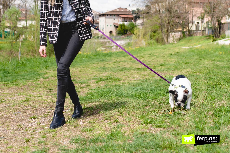 Puxa guia cão o que não fazer