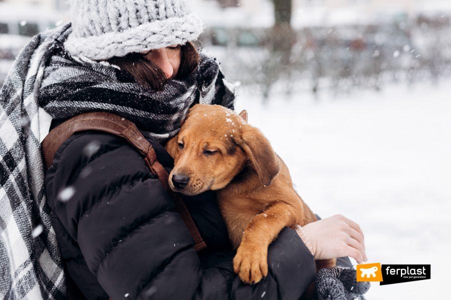моменты настоящего счастья. концепция принятия. спасти животных