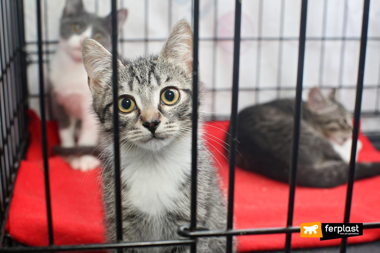 Маленькие бездомные котята в клетке