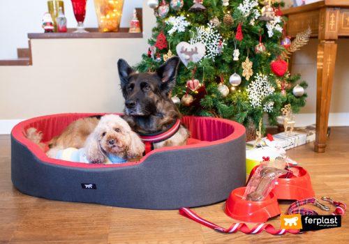 мероприятия сделать на рождество с животными