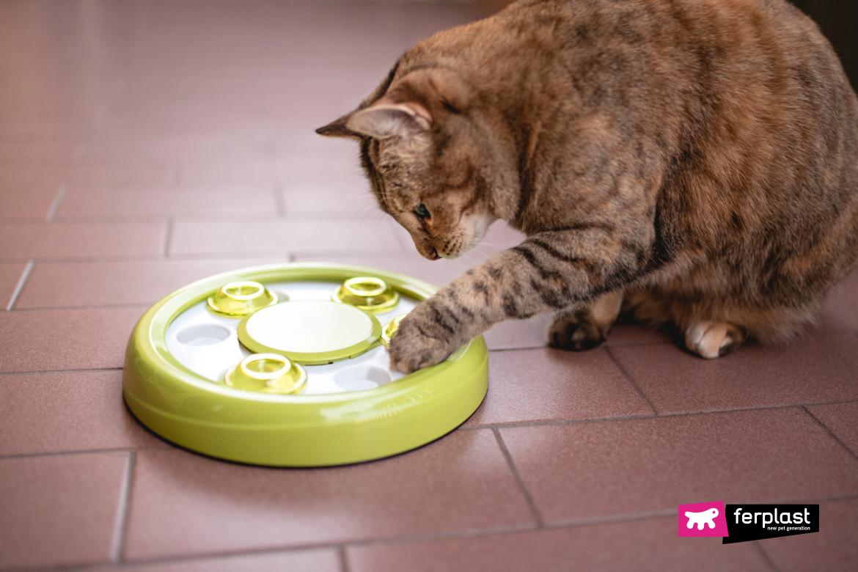 Откройте-для-себя-игру-для-кошек-ferplast