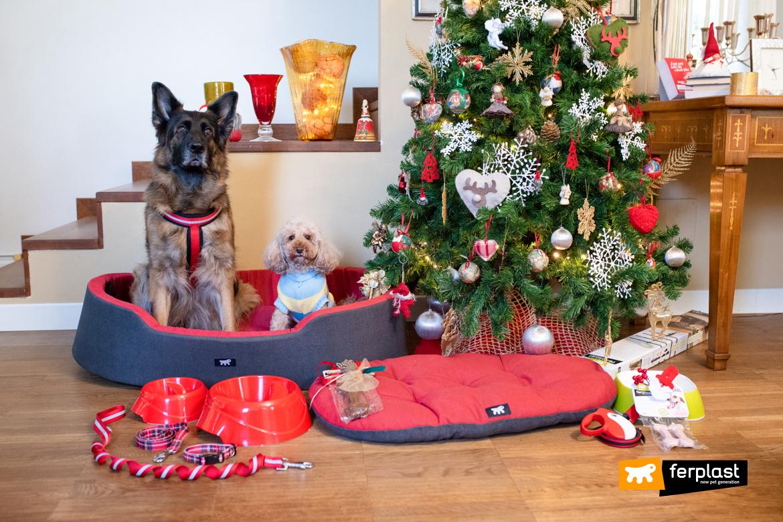 фото-собаки-рождество