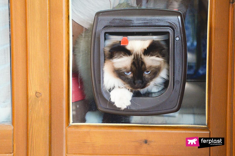лоскут для кошек ferplast отзывы