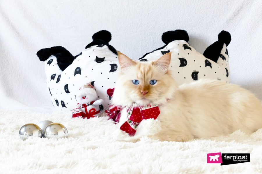 Рождество подарки кошки малобюджетный