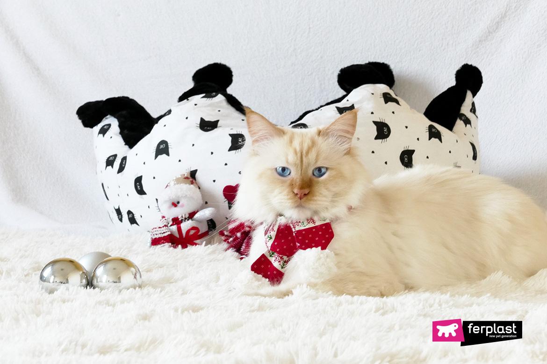 кошка малобюджетный рождественские подарки