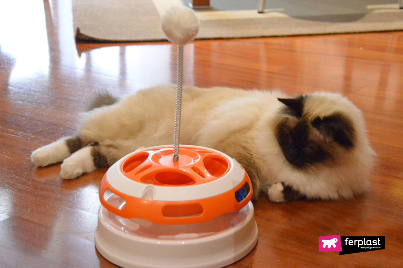 головокружение игра для кошек ферпласт