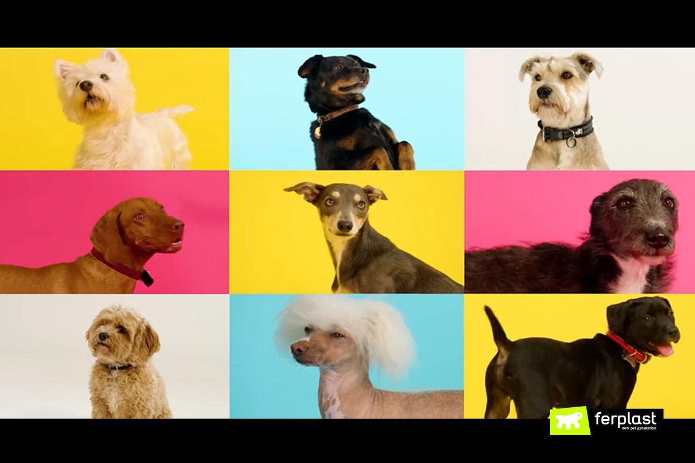 рождественская песня видео для животных raise the woof