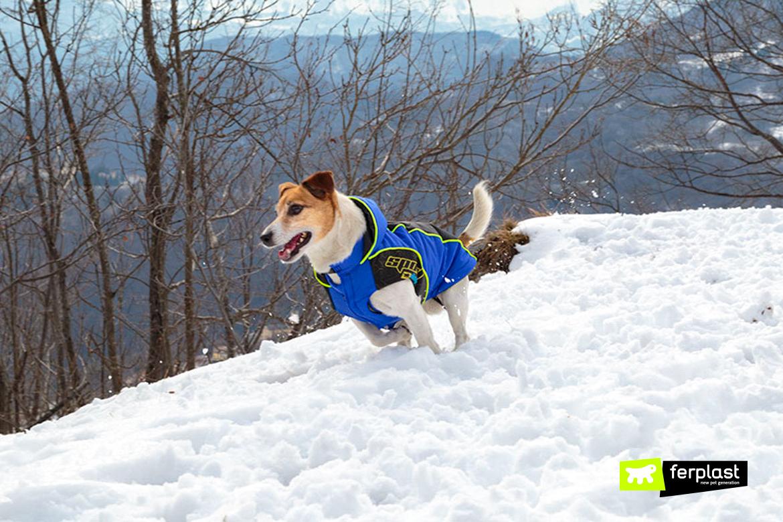 Equipe ferplast пальто для собаки кому холодно